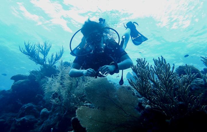Scientific Scuba Diving InCuraçao